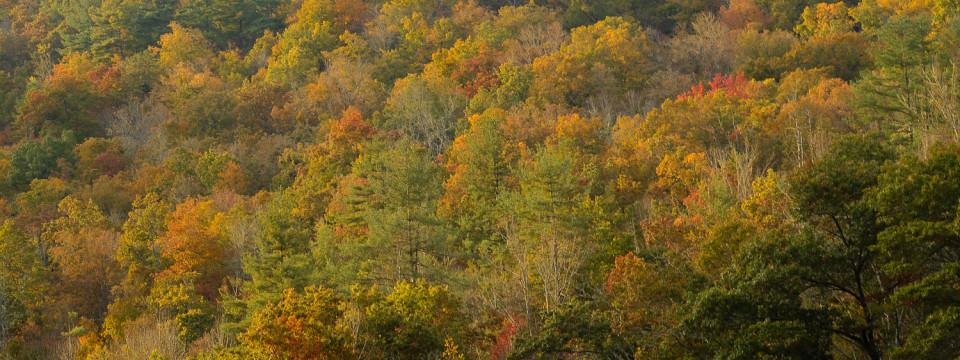 Smoky Mountain Fall Color