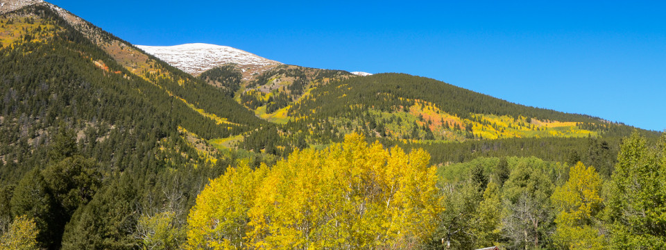 Golden Colorado Fall
