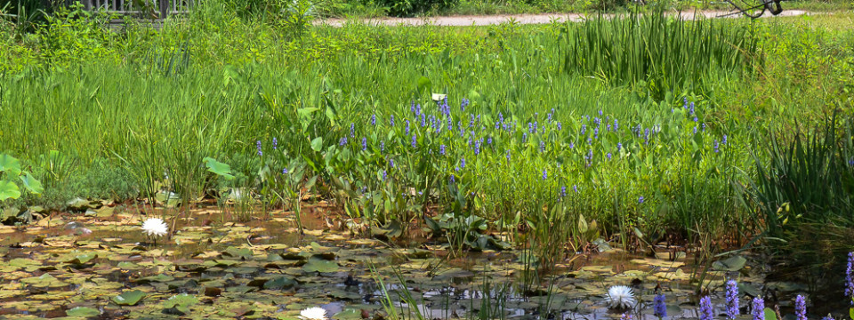 Gazebo Overlooking Waterlilies