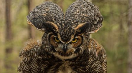 Photo Wild – Photographing Birds of Prey