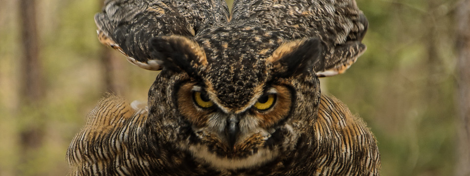 Photo Wild – Photographing Birds of Prey